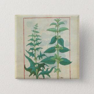 Urticaceae 15 Cm Square Badge