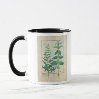 Urticaceae Mug