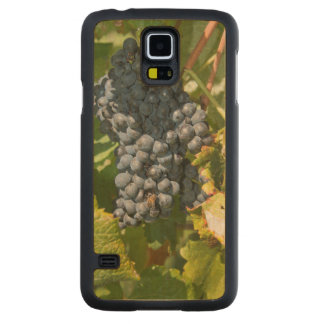 Uruguay, Montevideo, Colon Area. Bodegas Maple Galaxy S5 Case