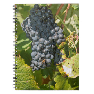Uruguay, Montevideo, Colon Area. Bodegas Notebook