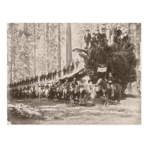 US Calvary protecting National Parks Post Cards