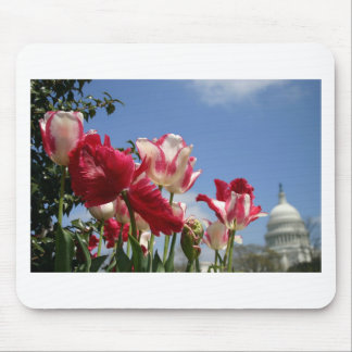 US Capitol spring Mouse Pad