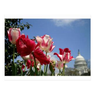US Capitol spring Postcard