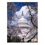 US Capitol with cherry blossoms, Washington DC Postcard