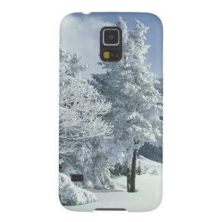 US, NH, Snow covered trees Trails Snoeshoe Galaxy S5 Covers