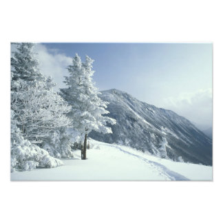 US, NH, Snow covered trees Trails Snoeshoe Photo