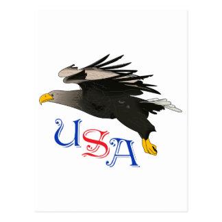 USA BALD EAGLE POSTCARD