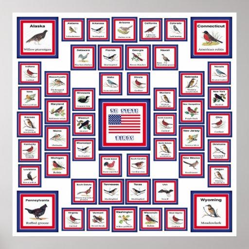 USA 50 STATE BIRDS WHITE/553 POSTER