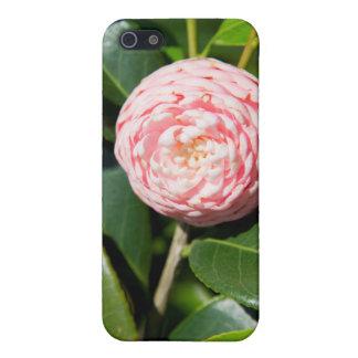 USA, Alabama, Theodore Near Mobile iPhone 5/5S Case