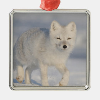 USA, Alaska, 1002 Coastal Plain of the ANWR. An 3 Silver-Colored Square Decoration
