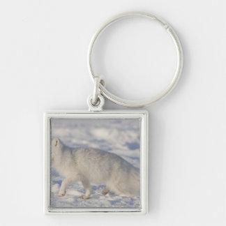 USA, Alaska, 1002 Coastal Plain of the ANWR. An 4 Silver-Colored Square Key Ring