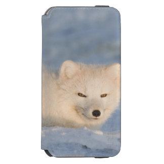 USA, Alaska, 1002 Coastal Plain of the ANWR. An Incipio Watson™ iPhone 6 Wallet Case