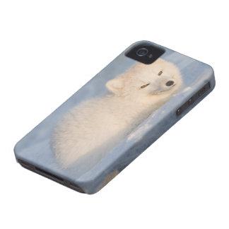 USA, Alaska, 1002 Coastal Plain of the ANWR. An iPhone 4 Cases