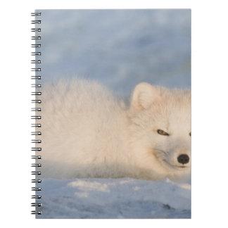 USA, Alaska, 1002 Coastal Plain of the ANWR. An Notebook