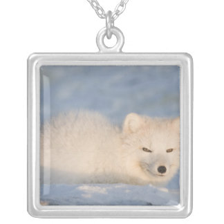 USA, Alaska, 1002 Coastal Plain of the ANWR. An Silver Plated Necklace