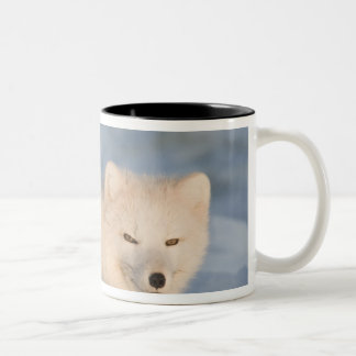 USA, Alaska, 1002 Coastal Plain of the ANWR. An Two-Tone Coffee Mug