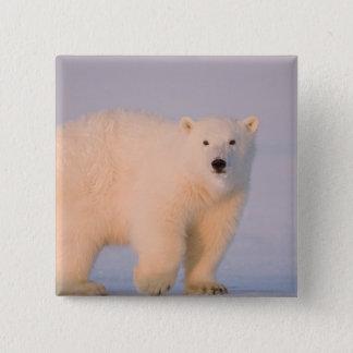 USA, Alaska, 1002 Coastal Plain of the Arctic 2 15 Cm Square Badge