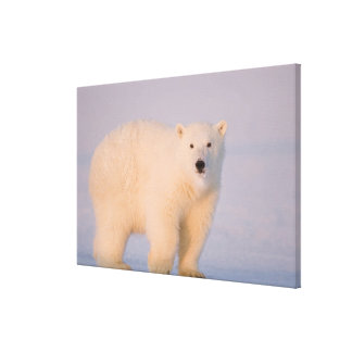 USA, Alaska, 1002 Coastal Plain of the Arctic 2 Gallery Wrap Canvas