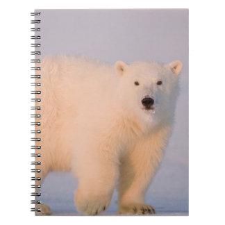 USA, Alaska, 1002 Coastal Plain of the Arctic 2 Spiral Notebook
