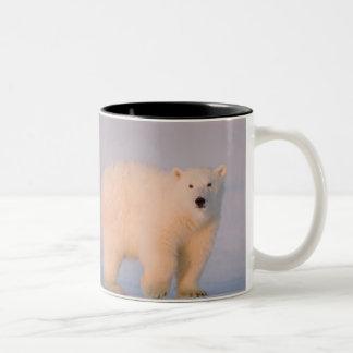 USA, Alaska, 1002 Coastal Plain of the Arctic 2 Two-Tone Coffee Mug