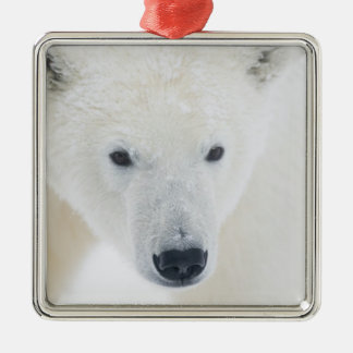 USA, Alaska, 1002 Coastal Plain of the Arctic 3 Christmas Ornament