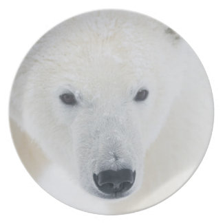 USA, Alaska, 1002 Coastal Plain of the Arctic 3 Plate