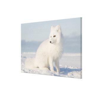 USA, Alaska, 1002 Coastal Plain of the Arctic 5 Stretched Canvas Print