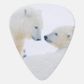 USA, Alaska, 1002 Coastal Plain of the Arctic Plectrum