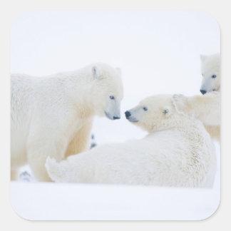 USA, Alaska, 1002 Coastal Plain of the Arctic Square Sticker