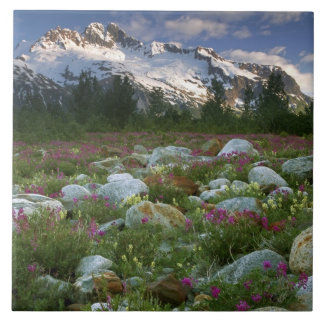 USA, Alaska, Alsek-Tatshenshini Wilderness. View Tile