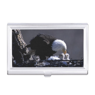 USA, Alaska, American bald eagle at nest with 2 Business Card Holder