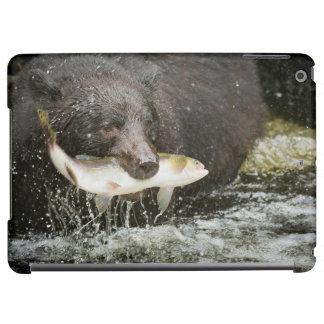 USA, Alaska, Anan Creek. Close-Up Of Black Bear iPad Air Cover