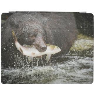 USA, Alaska, Anan Creek. Close-Up Of Black Bear iPad Cover