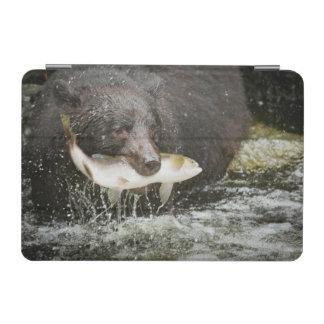 USA, Alaska, Anan Creek. Close-Up Of Black Bear iPad Mini Cover