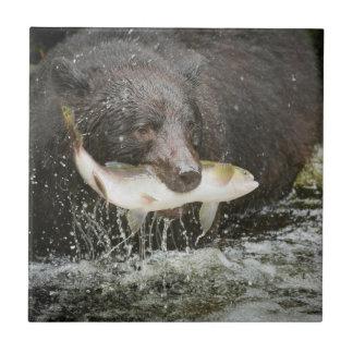 USA, Alaska, Anan Creek. Close-Up Of Black Bear Tile