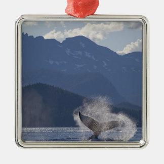 USA, Alaska, Angoon, Humpback Whale Megaptera 3 Silver-Colored Square Decoration