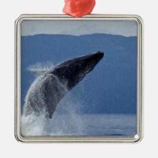 USA, Alaska, Angoon, Humpback Whale (Megaptera Christmas Ornament