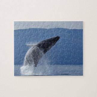 USA, Alaska, Angoon, Humpback Whale (Megaptera Jigsaw Puzzle
