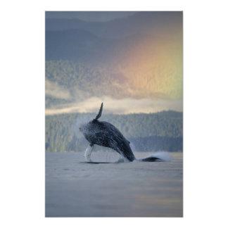 USA, Alaska, Angoon, Humpback Whale Megaptera Photograph