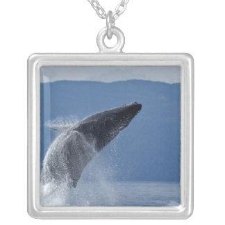 USA, Alaska, Angoon, Humpback Whale (Megaptera Silver Plated Necklace