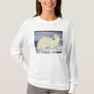 USA, Alaska. Arctic fox in winter coat. Credit T-Shirt