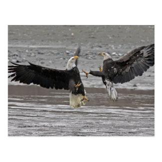 USA Alaska Chilkat Bald Eagle Preserve Two Post Card