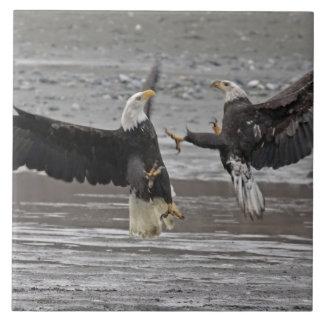 USA, Alaska, Chilkat Bald Eagle Preserve. Two Tile