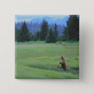 USA, Alaska, Clark Lake National Park. Grizzly 15 Cm Square Badge