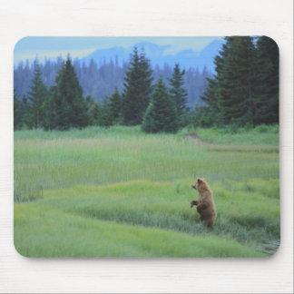 USA, Alaska, Clark Lake National Park. Grizzly Mouse Mat