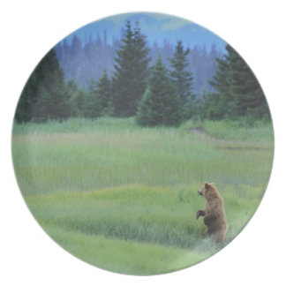 USA, Alaska, Clark Lake National Park. Grizzly Party Plates