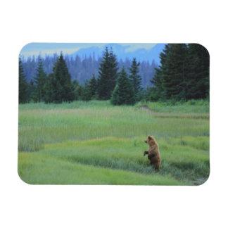 USA, Alaska, Clark Lake National Park. Grizzly Rectangular Photo Magnet
