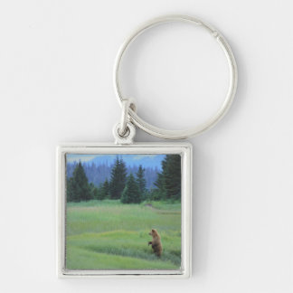 USA, Alaska, Clark Lake National Park. Grizzly Silver-Colored Square Key Ring
