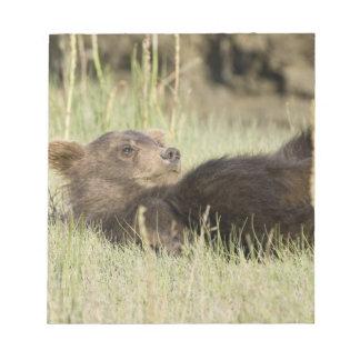 USA. Alaska. Coastal Brown Bear cub at Silver 2 Notepad