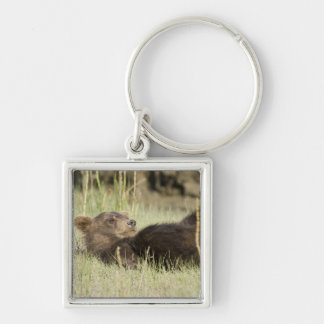 USA. Alaska. Coastal Brown Bear cub at Silver 2 Silver-Colored Square Key Ring